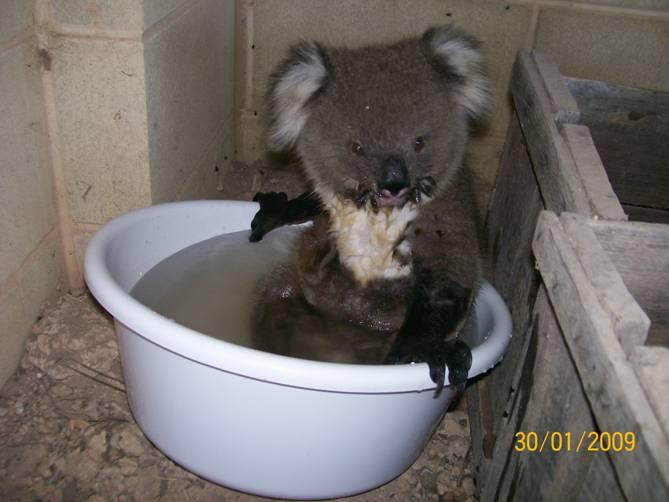 GearDiary Koala's Bucket