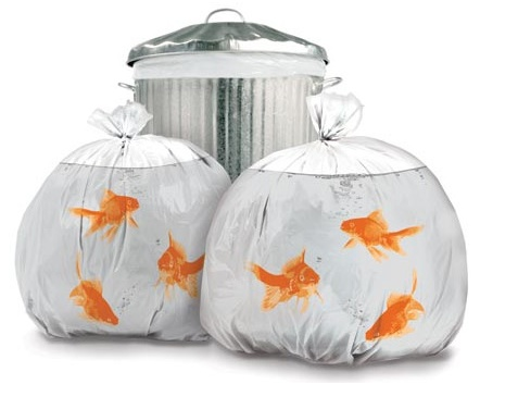 GearDiary Goldfish trash bags pretty up the neighborhood and drive cats nuts