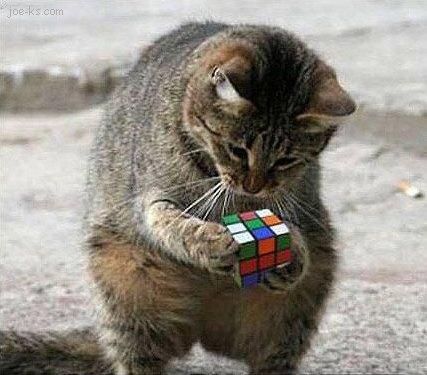 Gattilicious  =^.^= - Pagina 2 RubiksCubeCat