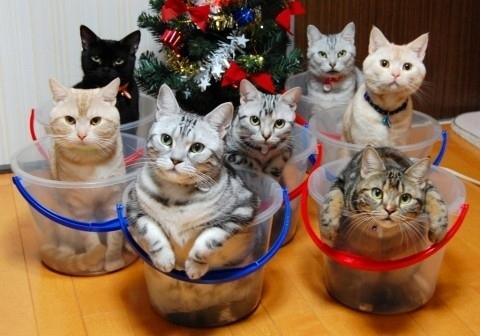 cats buckets