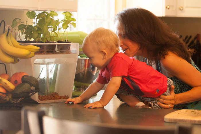 GearDiary Home Aquaponics Kit: A Self-Cleaning Fish Tank that Grows Food