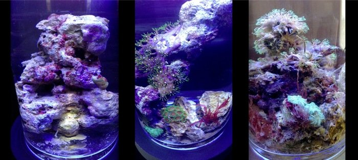 GearDiary PJ Reef Micro Saltwater Coral Habitat for the Wannabe Marine Biologist in All of Us