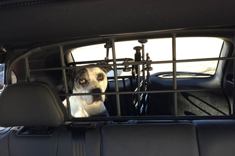 The XC60 was equipped with a dog cage/Image by David Goodspeed