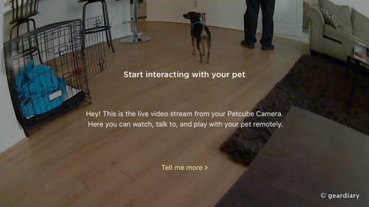 GearDiary A Human Will Never Be Apart from Their Pet with the Petcube