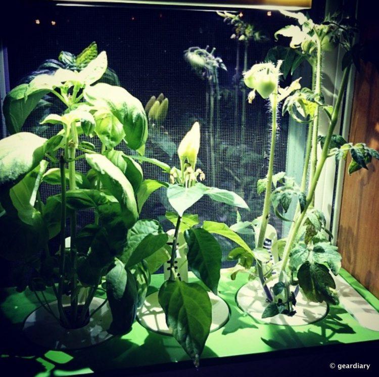 12-Click & Grow Herb Garden 1192x1186.09 PM