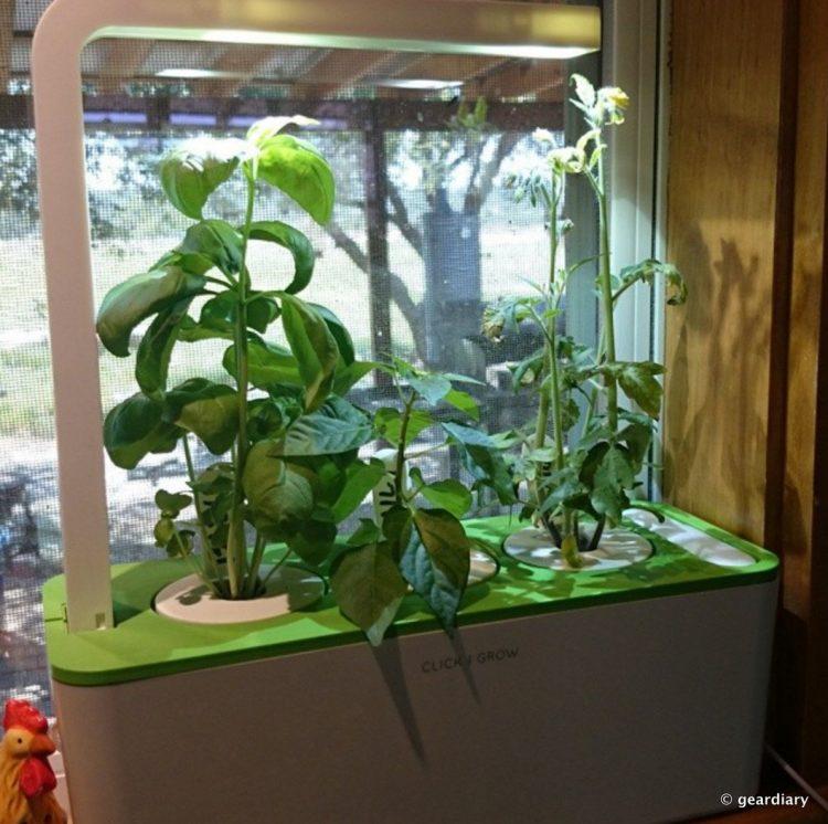 13-Click & Grow Herb Garden 1192x1186.23 PM