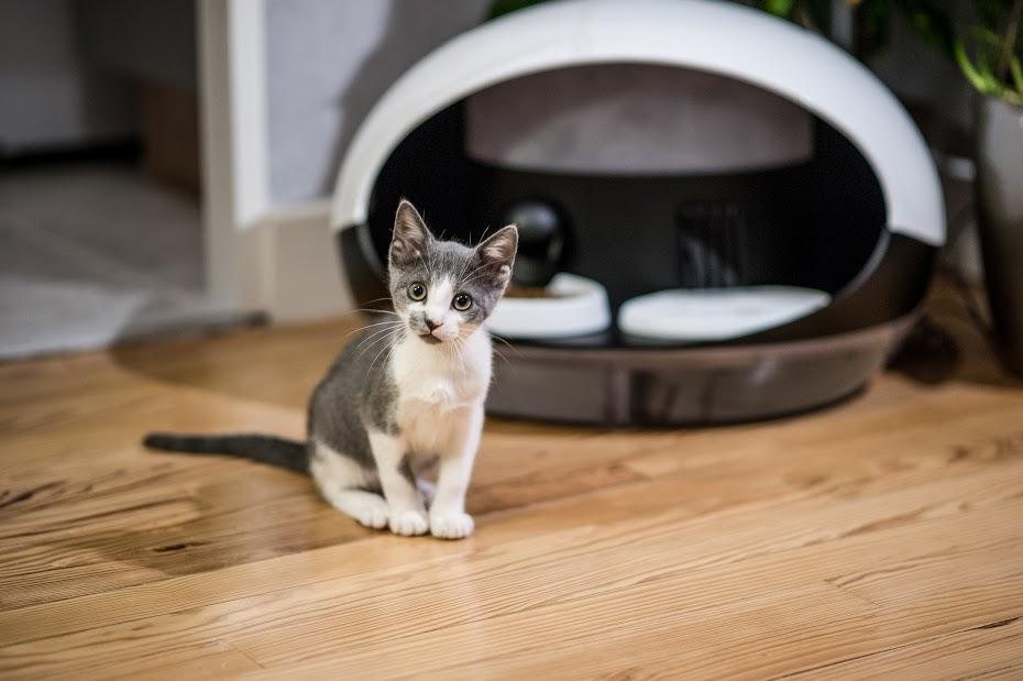 GearDiary Catspad Smart Pet Feeder Upgrades Your Cat's Pad