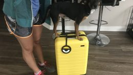 GearDiary Your Carry-On Luggage Will Stand Out with Away's New Minion Yellow Suitcase