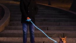 GearDiary You and Your Dog Will Light Up the Night with Nitey Leash