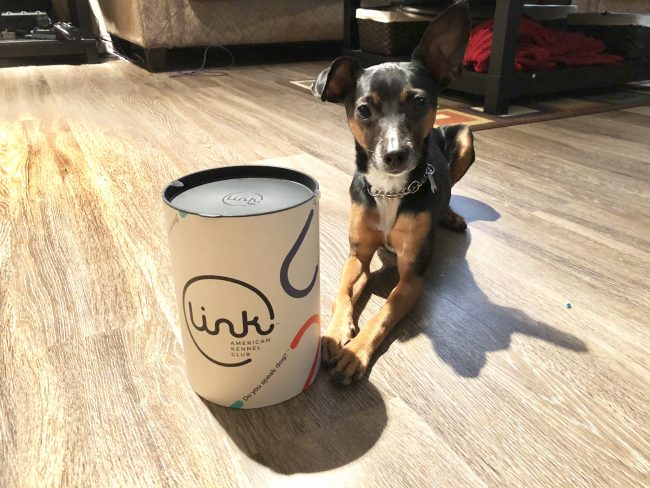 GearDiary There's No Better Way to Bond with Your Pet Than the Link AKC
