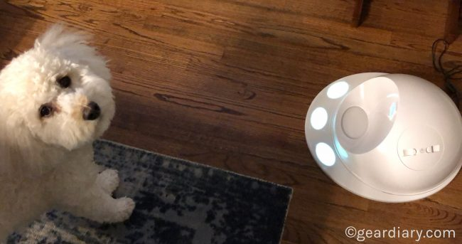 Nava Meets the CleverPet, and She's One Happy Pup!