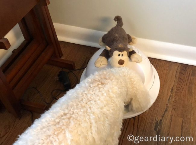 GearDiary Nava Meets the CleverPet, and She's One Happy Pup!