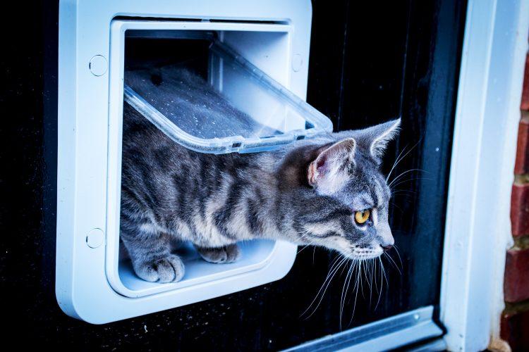 SureFlap's Microchip Pet Door Keeps Fido Safe