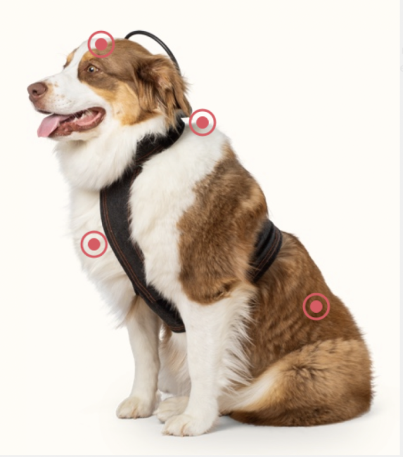 Calmer Canine Soothes Your Anxious Dog in Sci-Fi Style